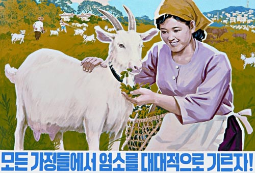"""Let's extensively raise goats in all families"" (photo)"